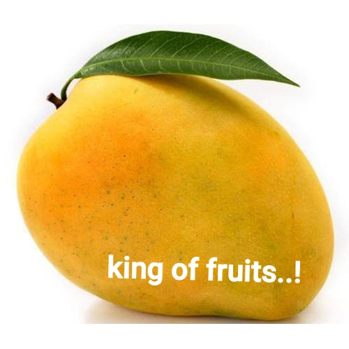 mango is king of fruits