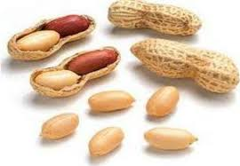 Groundnut - king of oilseeds