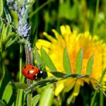 Bio control of insect pests