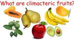 Ripening, climactric and non climacteric