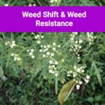 Weed shift and resistance