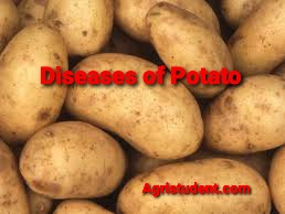 Diseases of Potato